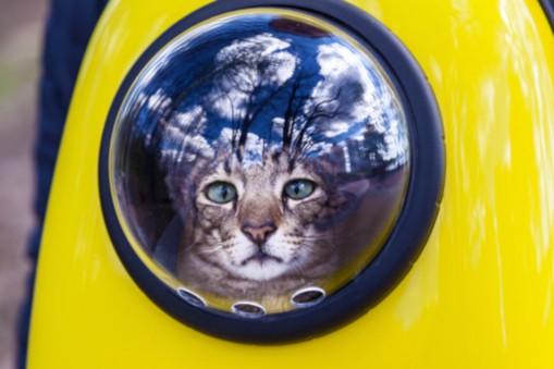 Pet Carriers: Cat Bubble Backpacks