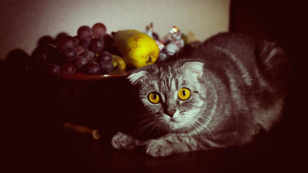Can my cat be vegan?